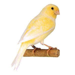 1 В I - желтый шиммель